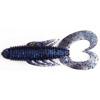 雙尾蟲-閃藍黑
